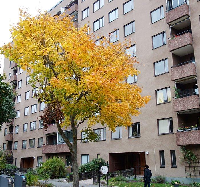 Byggmästargruppen har fått förtroendet av Brf Takten i Sollentuna att utföra stambyte i deras 234 lägenheter.